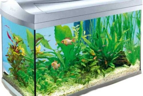 Fish Tank Heater Guide